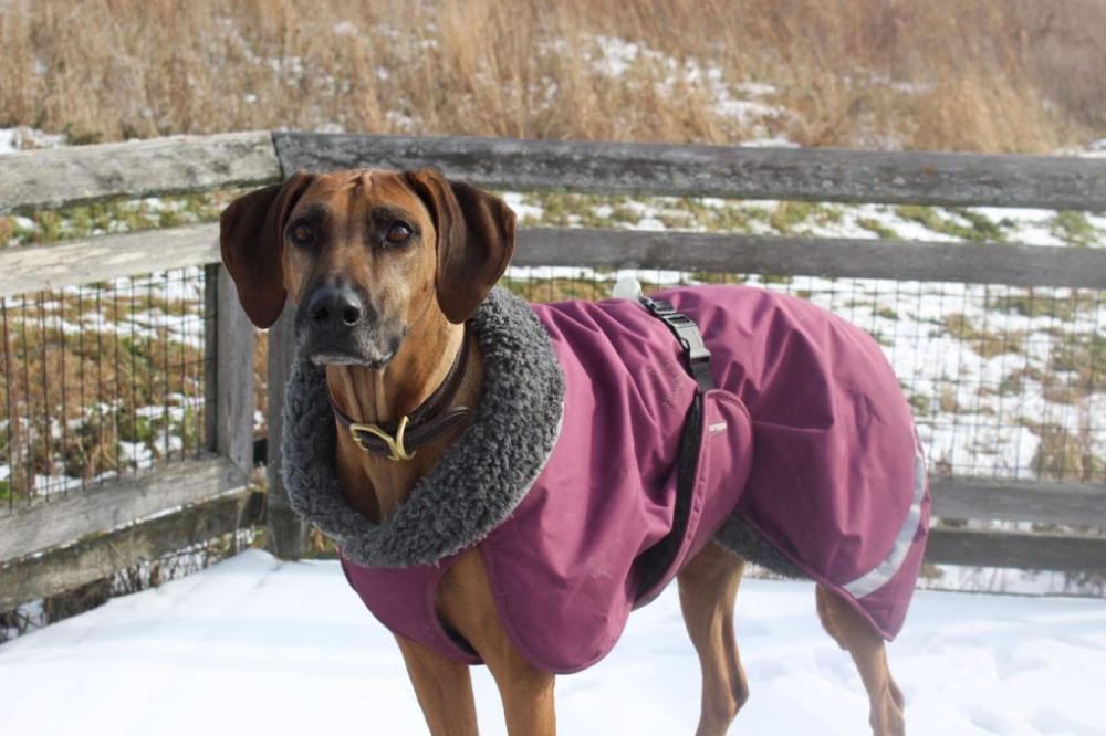 Winter Dog Coat Review Hurtta vs. Pomppa » The Kindred