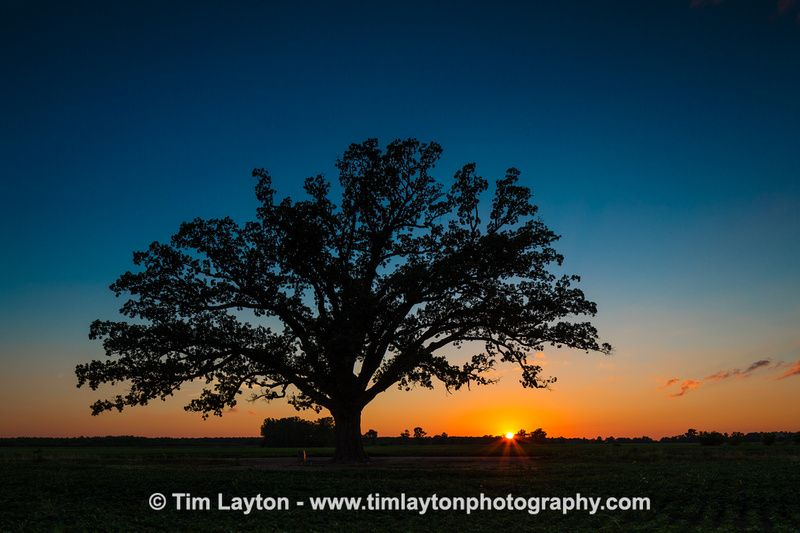 Tips For Creating Extraordinary Landscape Photos With Trees