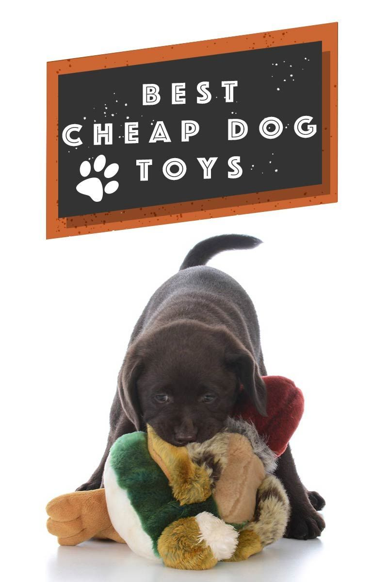 Best Cheap Dog Toys Great Products For Your Dog