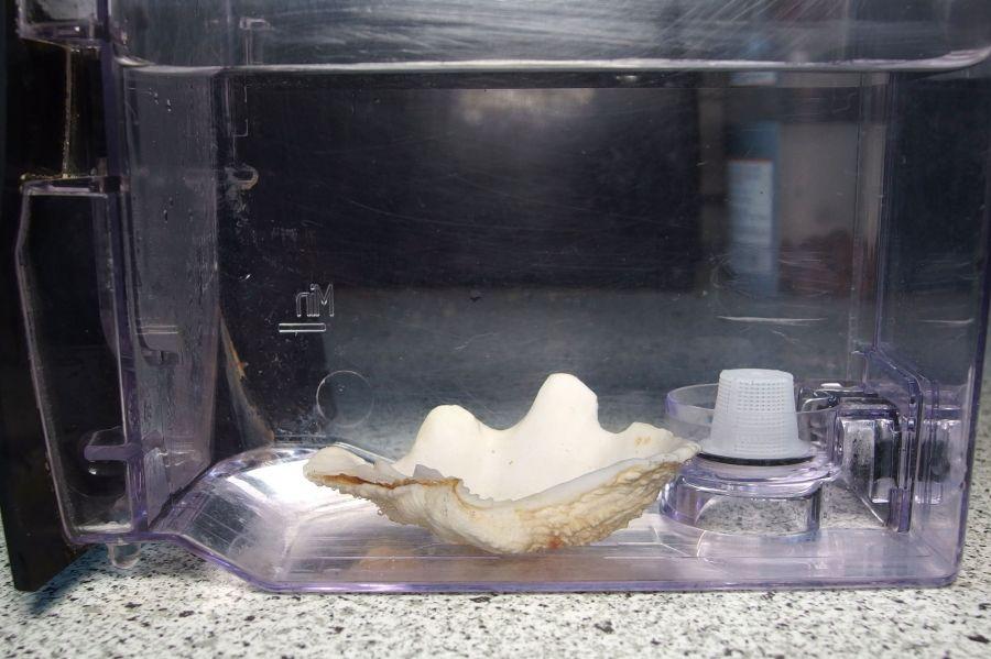 Muschel Gegen Kalk In Kaffeemaschinen Und Wasserkochern