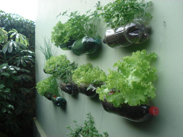 Famosos jardim vertical garrafa pet - Pesquisa Google | JARDINS  OS81