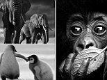 Photographer comes face to face with deadly animals to capture stunning images - http://www.celeboftea.com/photographer-comes-face-to-face-with-deadly-animals-to-capture-stunning-images/