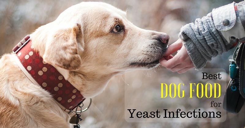 Dog Food For Yeast Infections Best Dog Food Dog Food Recipes Dogs