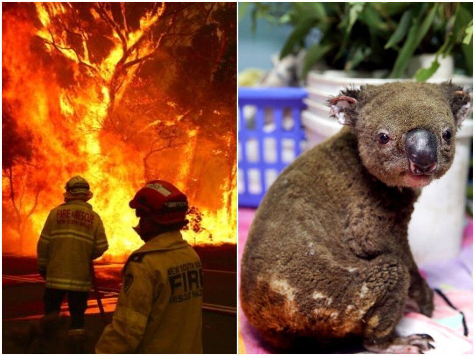 火事 コアラ オーストラリア