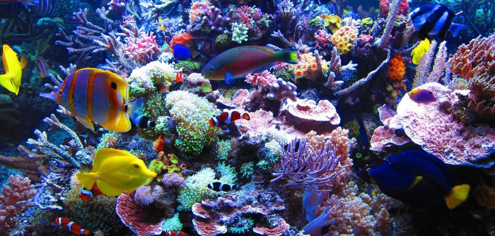 Google Image Result For Http Styfisher Biz Wp Content Uploads 2019 07 Aquarium Background Jpg Saltwater Aquarium Saltwater Aquarium Tanks Marine Fish Tanks