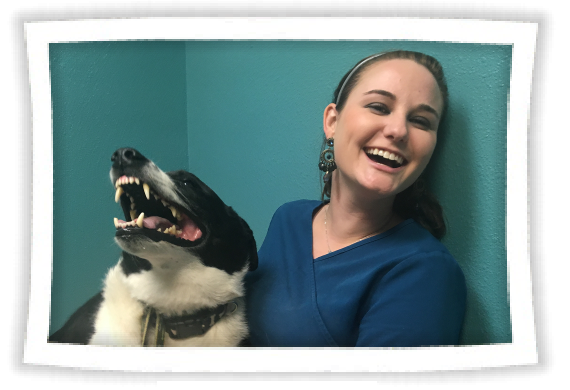 Tips and Links on Pet Dental Care Pet dental care, Pet
