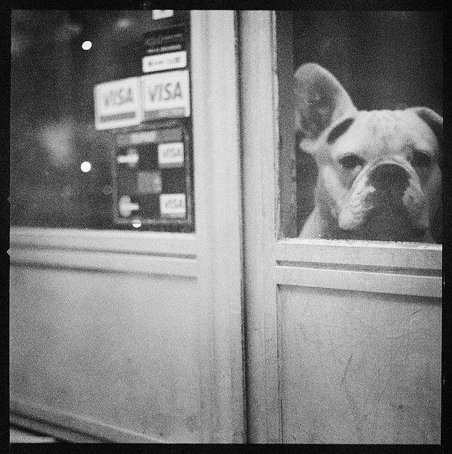 Dog in Madrid. Edward Olive photograph