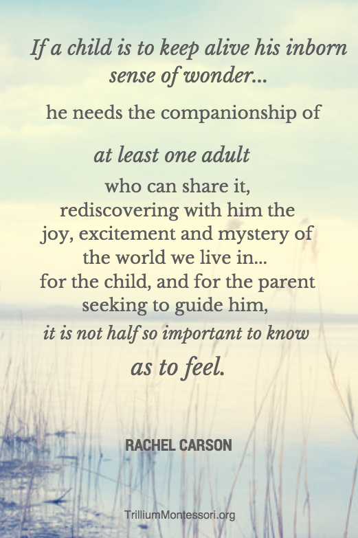 Rachel Carson Quote The Post Includes Free Nature Journal Prompts Classy Rachel Carson Quotes