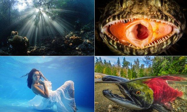 Nearly 8,000 pictures were entered for a competition with 17 categories from above water, to wrecks, sharks and even underwater fashion featuring models.