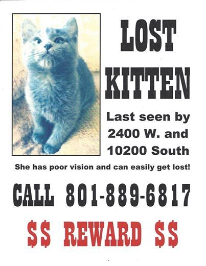 A Little Girl In South Jordan Needs Your Help To Find Her Special Needs Kitten Southjordan Jordan Utah Lostpet With Images Losing A Pet Find Pets Lost Cat