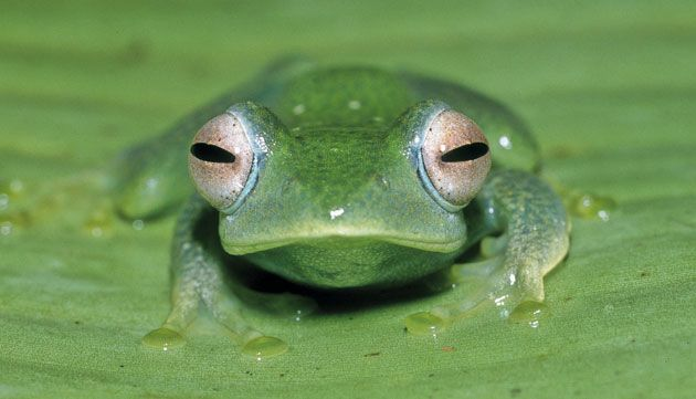 In Pictures The Week In Wildlife Funny Frogs Frog Animals
