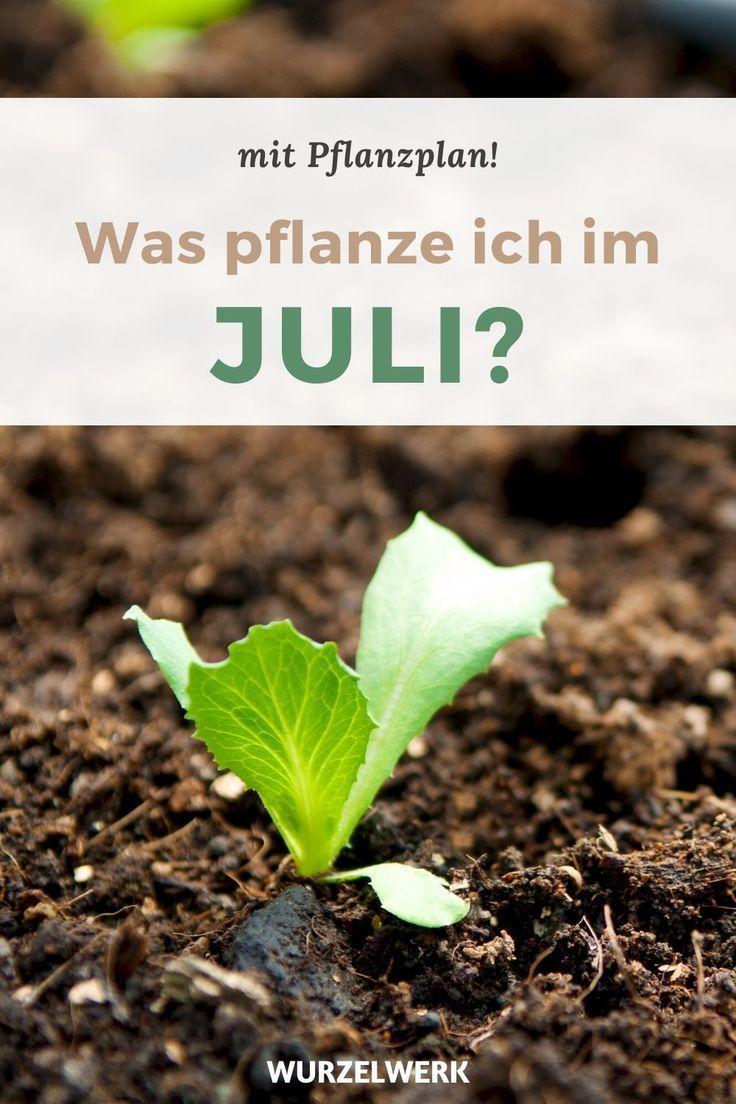 Aussaat & Pflanzen im Juli PDF Pflanzplan Wurzelwerk