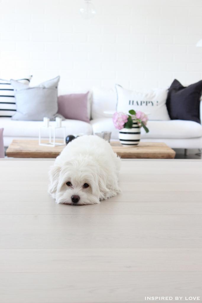 White interior & white dog