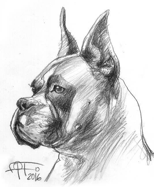 Boxer Lapiz Sobre Papel Dibujos De Perros Pintura Perro Perros Dibujos A Lapiz