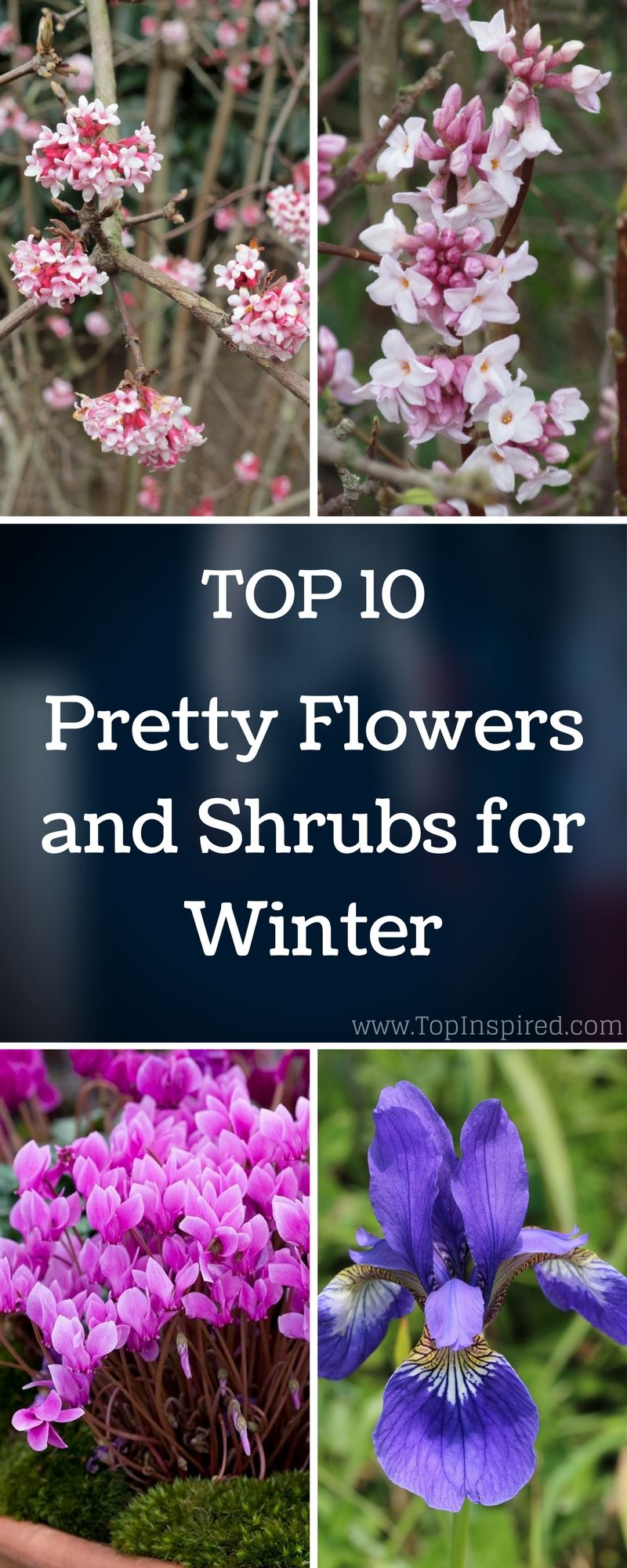 top 10 pretty flowers and shrubs for winter winter gardens and