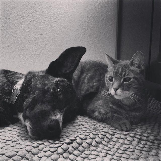 """""""Sorta kinda maybe friends."""" LOL! #cats #dogs #pets"""
