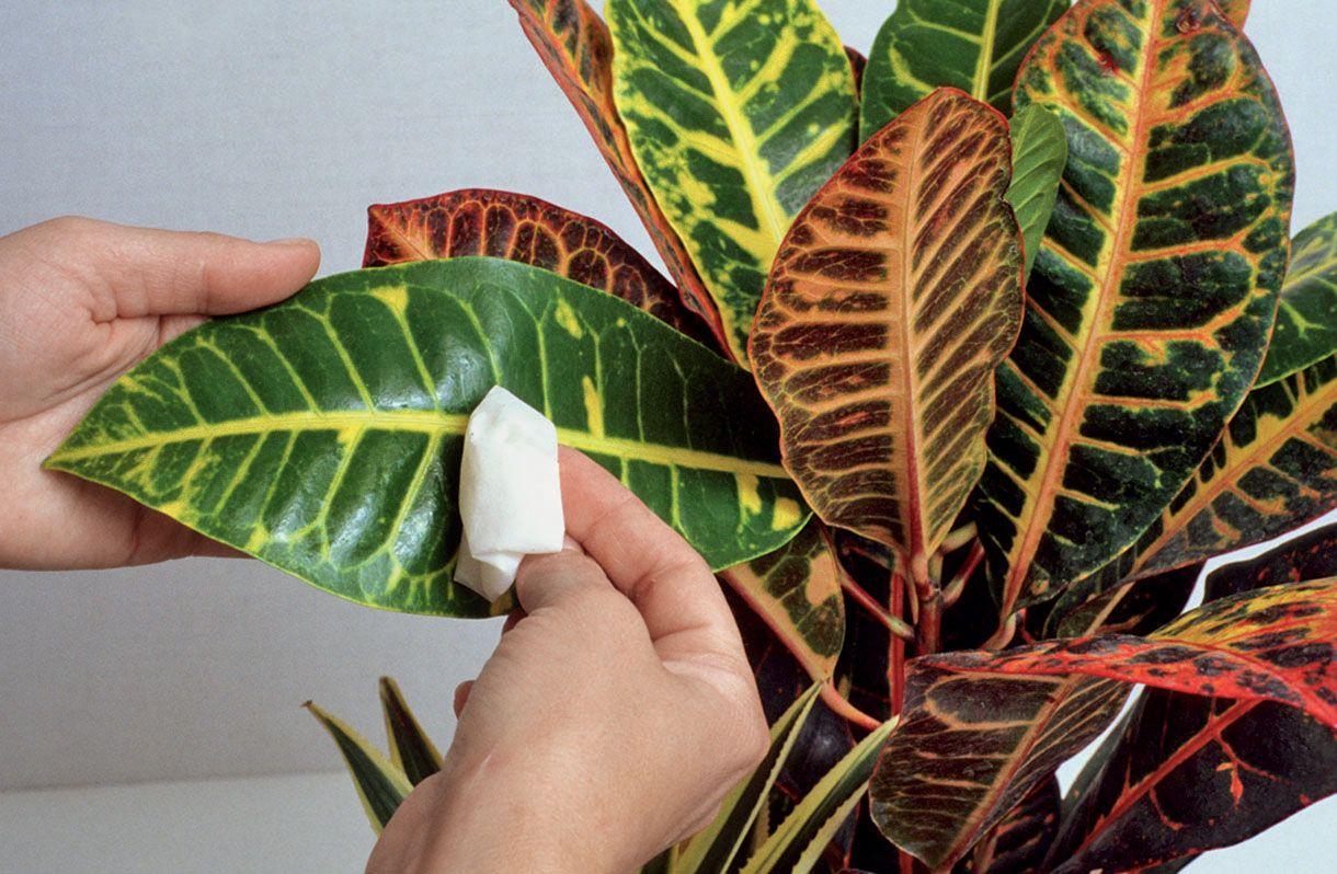 Comment S Occuper De Ses Plantes D Interieur Au Quotidien Pour Les