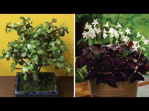 5 Piante Che Attraggono Fortuna E Soldi A Casa Tua Youtube Plants Gardening Tips Feng Shui