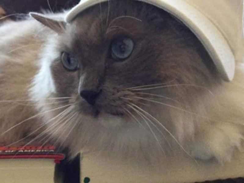 Cat In The (Cruz) Hat