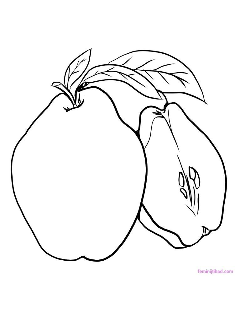 Quince Coloring Page Download Fruit Coloring Pages Coloring Pages