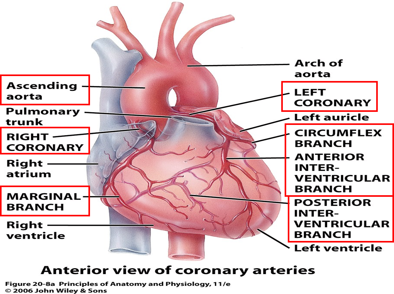 Studyblue.com Anatomy & Physiology | Medical billing, insurance ...