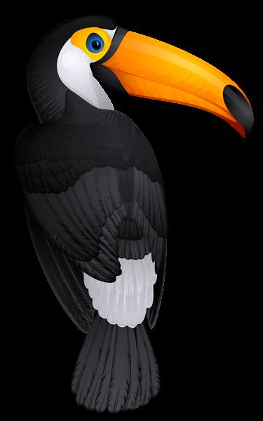 Toucan Bird Png Clipart Picture Parrots Art Toucan Art Birds Painting