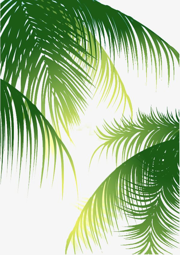Leaves Background Coconut Green Leaves Green Background Green Leaves Green Vector Palm Vector Leaves Green Leaf Background Leaf Background Palm Tree Background Search more hd transparent tropical leaves image on kindpng. pinterest