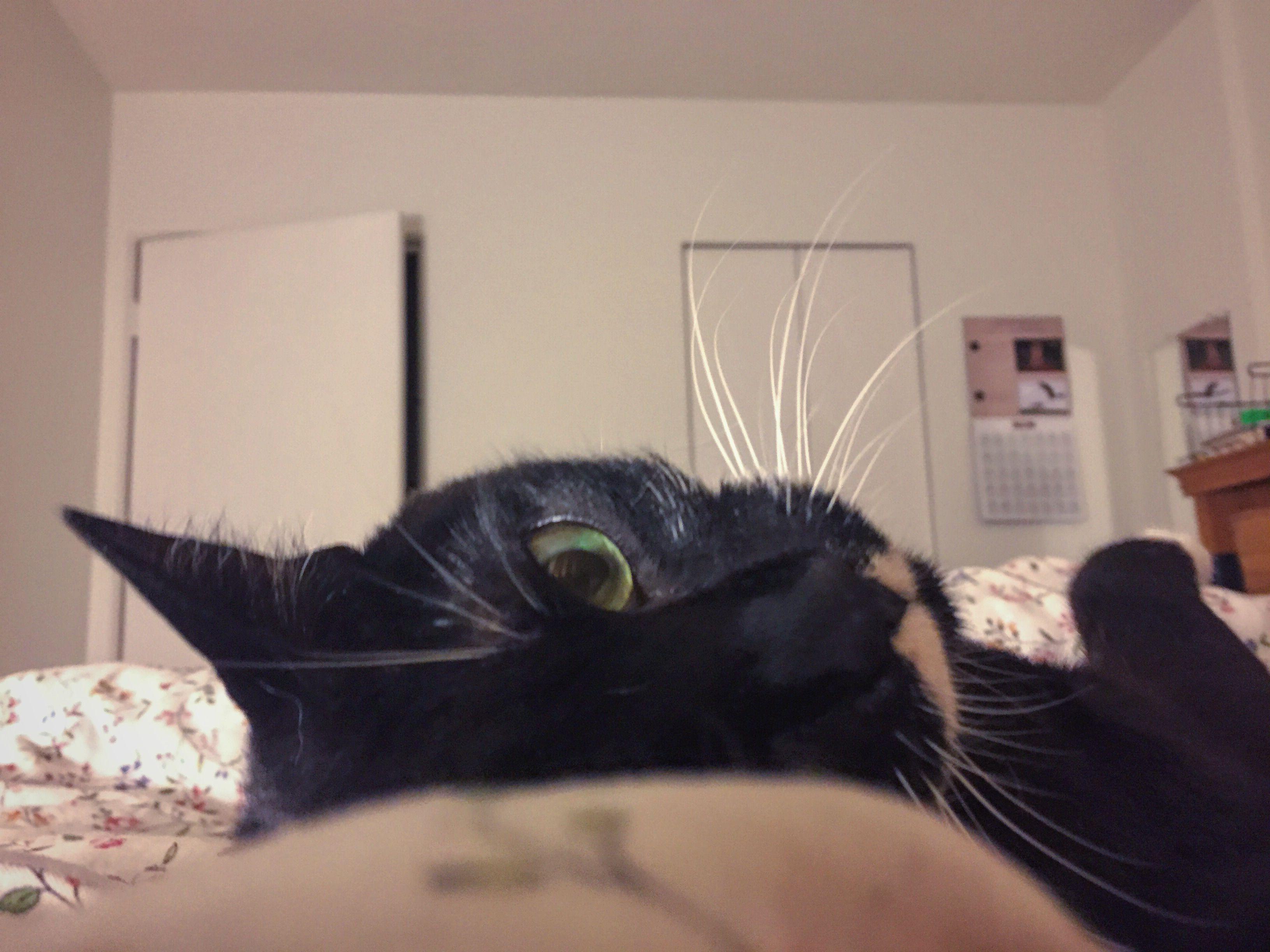 Cute! Bedtime cat