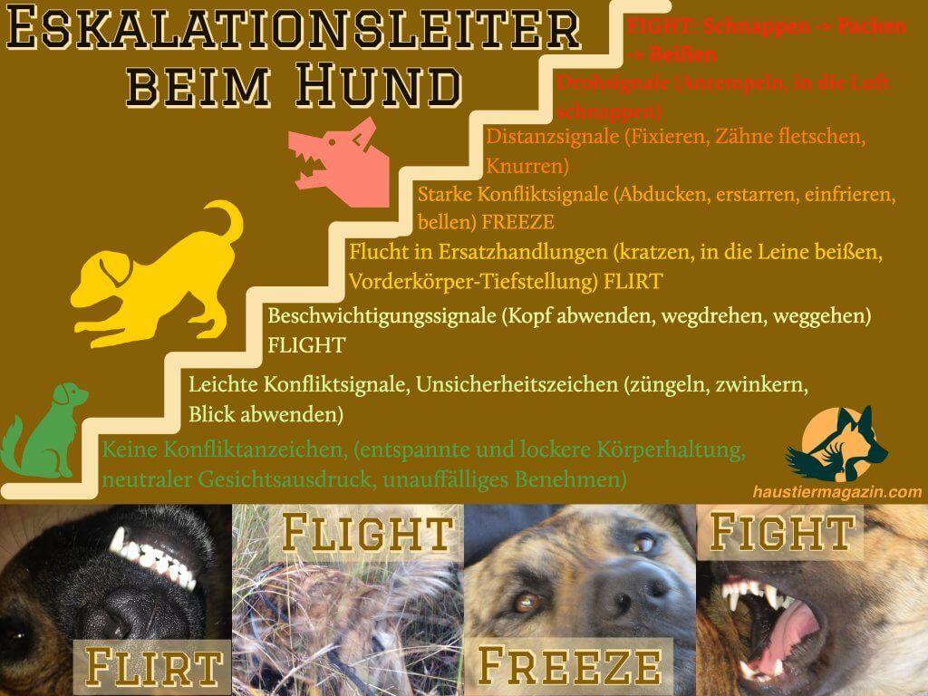 Eskalationsleiter Hund Hunde Gesichtsausdrucke Gesicht Ausdruck