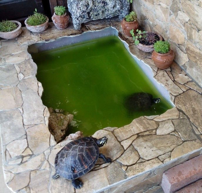 Un peque o estanque para tortugas una casa turtle pond for Plastico para estanques artificiales