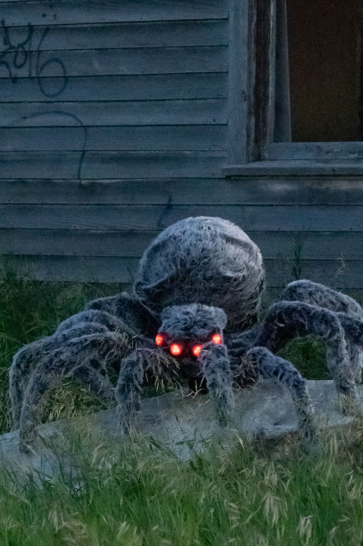 Photo of DIY Giant Halloween Spider Decoration to Scare Your Neighbours