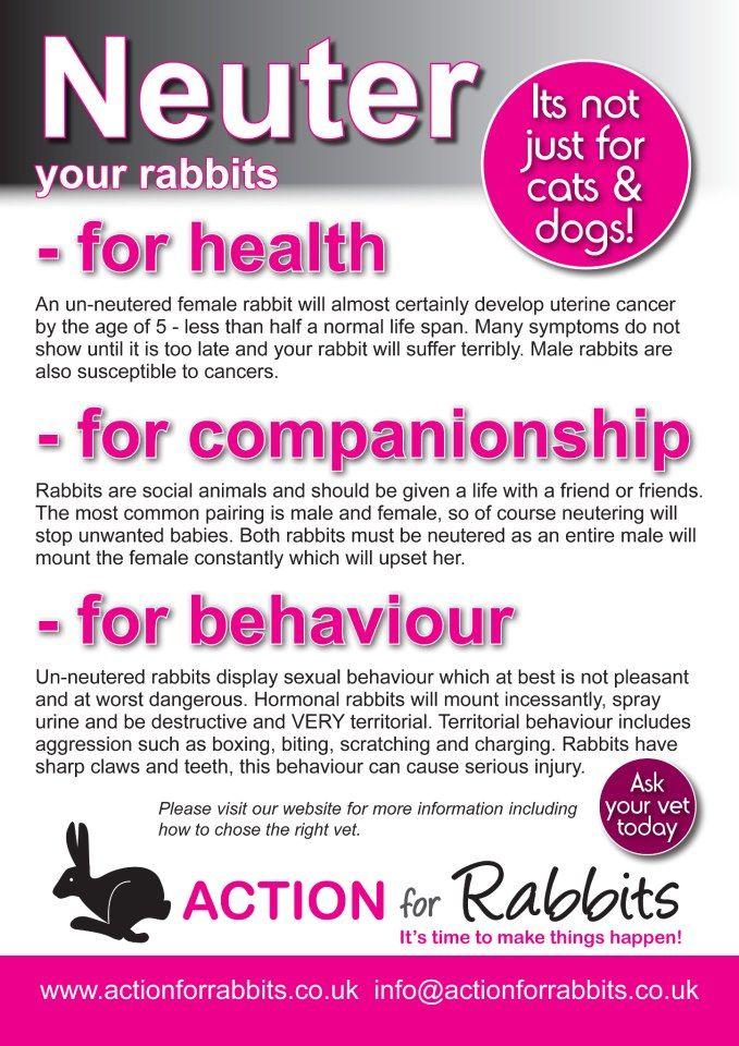 Neuter Your Bunnies Kaninchen Habit