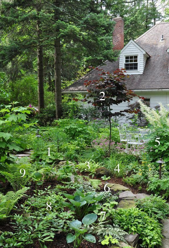 Tips To Improve Your Home Gardening Experience In 2020 Shade Garden Plants Cottage Garden Shade Garden
