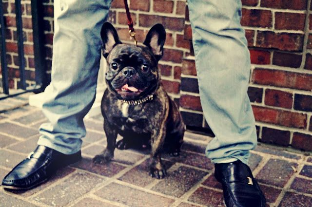 New Shoes & A French Bulldog.
