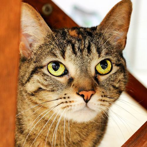Adopt Penny on (With images) Pets, Animals, Pets cats