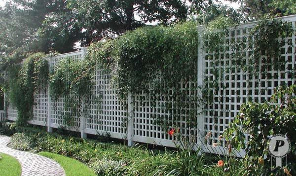 Here 39 S A 8 Foot High Fence But This One Has Squares