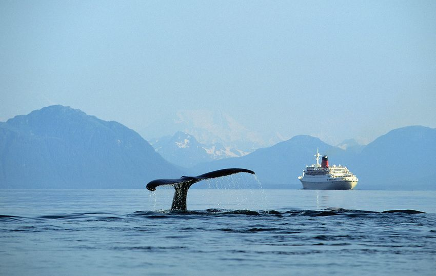 Costa Cruises To Educate Passengers On Conservation Of Whales - Cruise ship whale