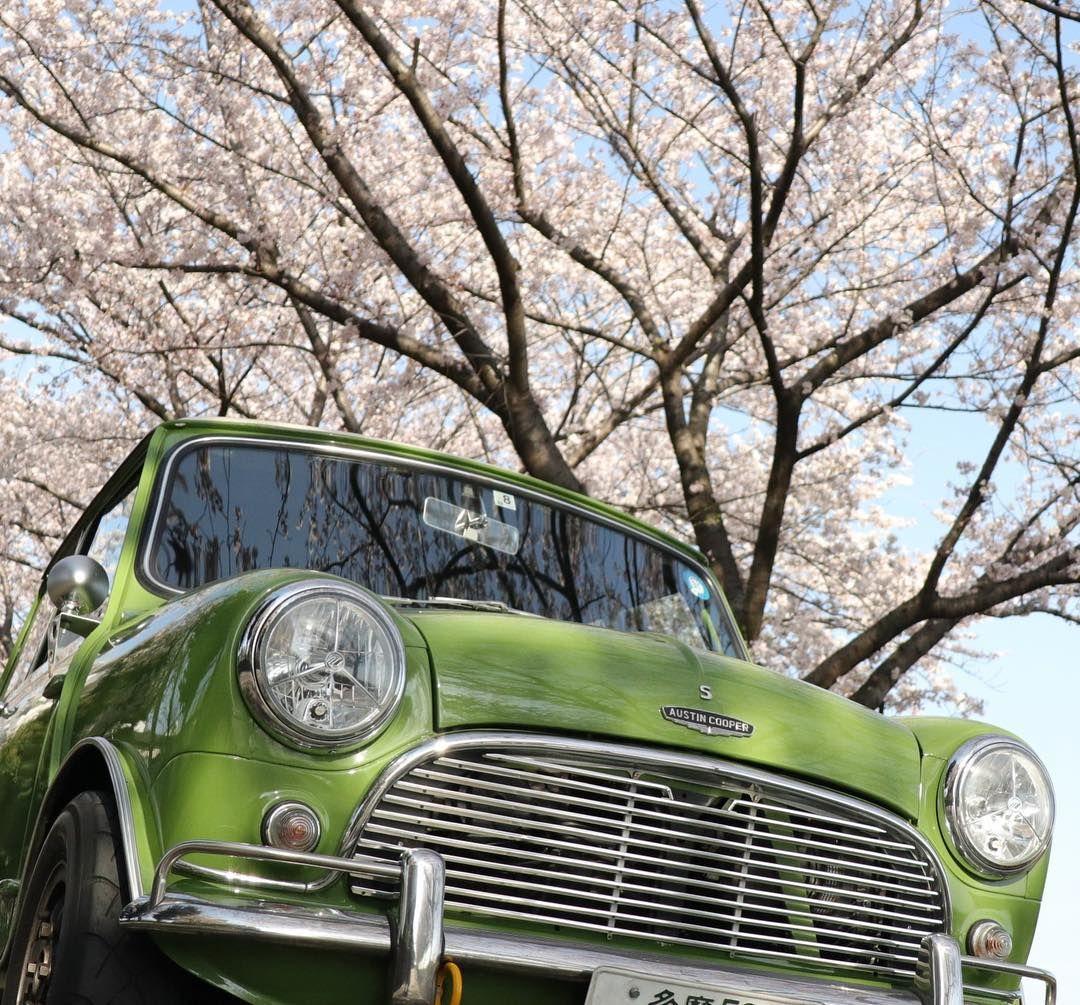la imagen puede contener coche arbol calzado y exterior クラシック ミニ ミニ 土手