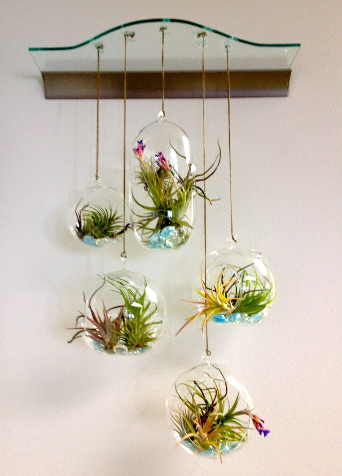 Adorable And Cute Hanging Decorations With Adorable And Cute Blown Glass Terrarium Containers Hanging Air Plants Air Plant Terrarium Glass Terrarium Containers