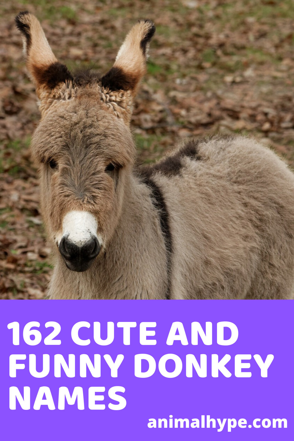 162 Cute and Funny Donkey Names in 2020 Funny, Donkey, Names