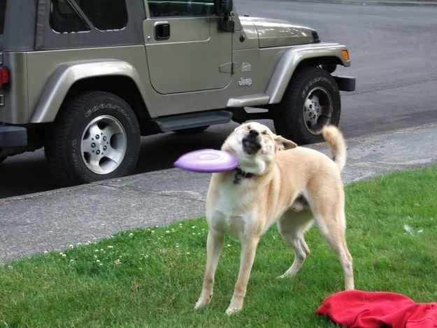 Ce chien qui regrette d'être venu pour jouer.