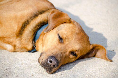 Por qué a los perros les encanta tomar el sol