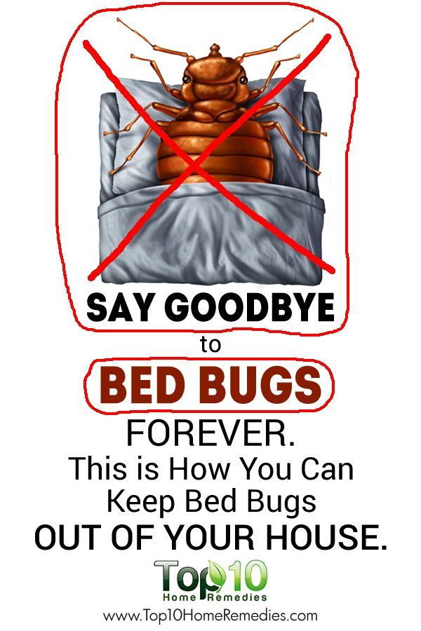 Heres How to Take Control Get Rid of Bed Bugs from Your House