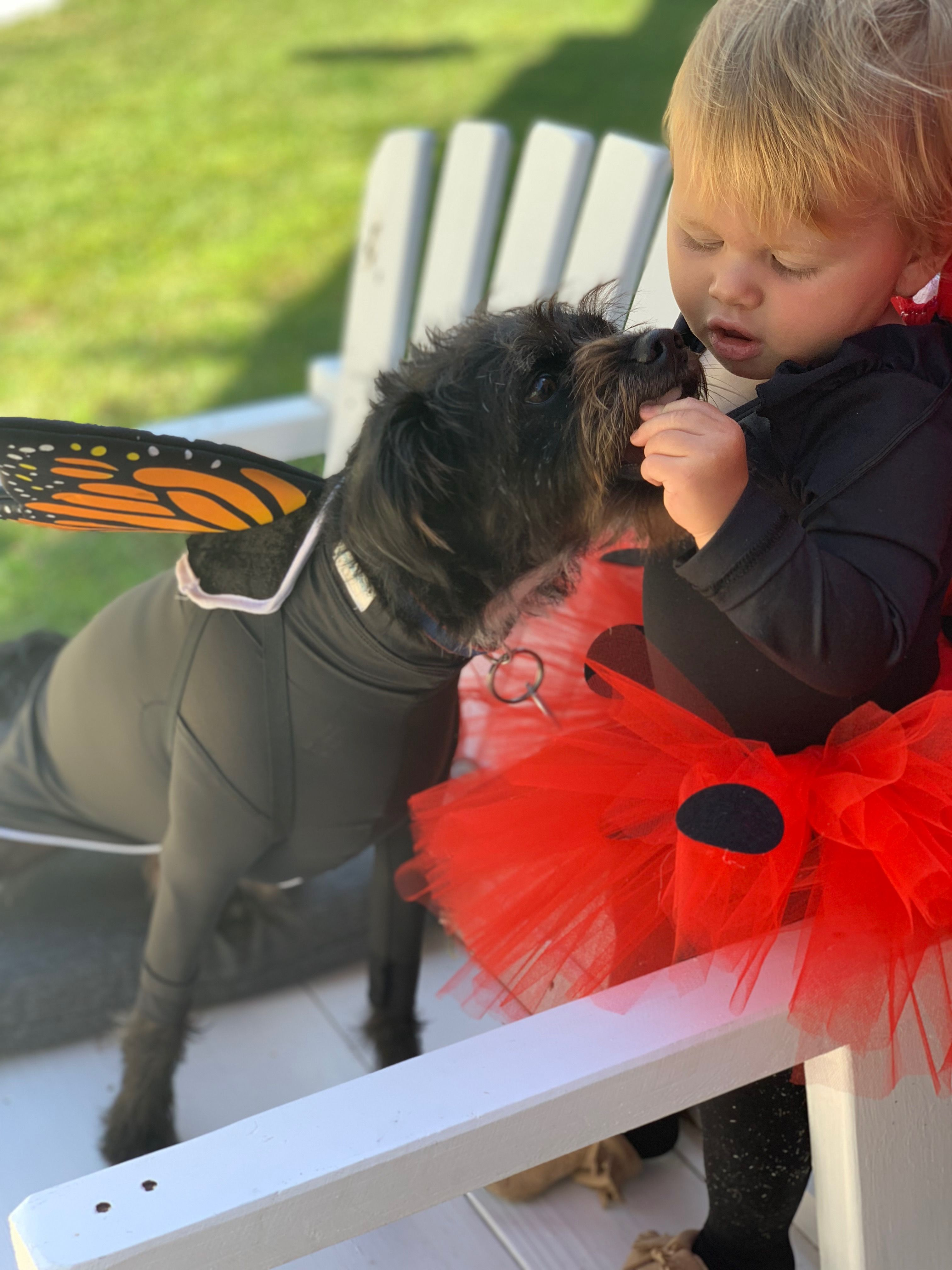 Halloween Costume Ideas For The Whole Family Sheddefender Dog