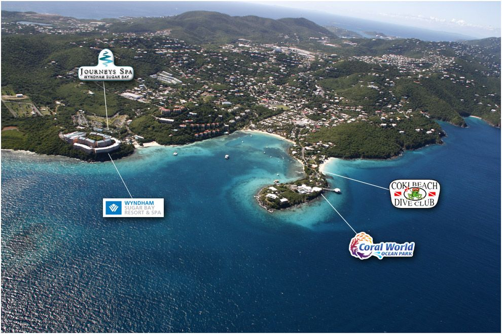 Coki Beach Snorkeling Google Search Usvi Pinterest