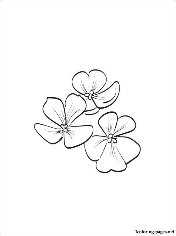 Saintpaulia Ionantha Or African Violet Coloring Page African Violets Flower Coloring Pages Coloring Pages