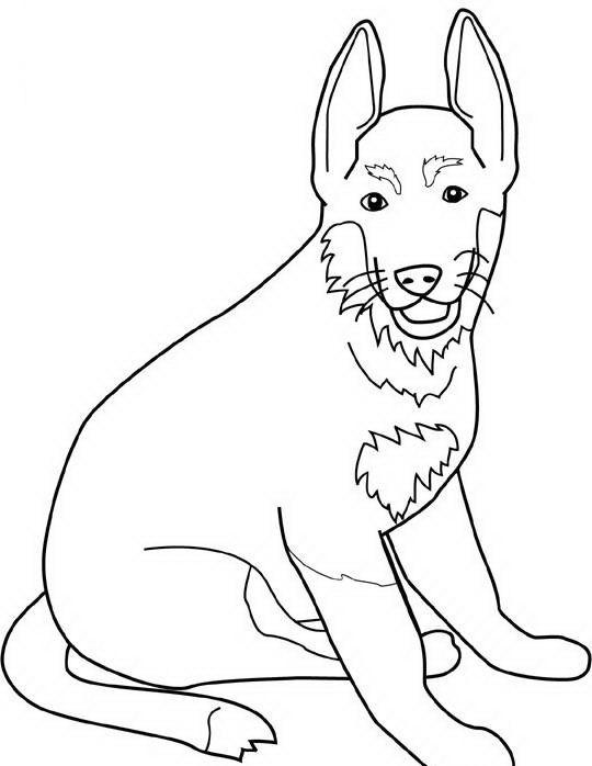 Perros de raza para colorear | Dibujos para colorear | Pinterest ...