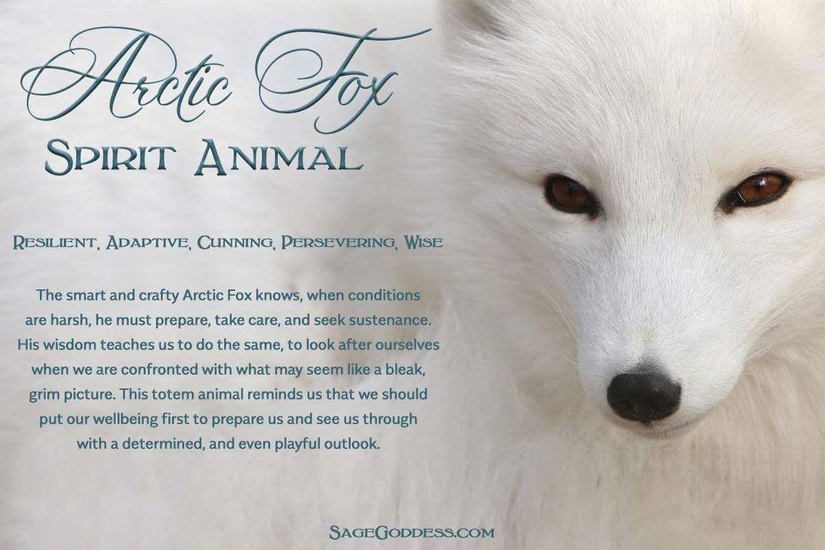 Arctic Fox Spirit Fox Spirit Spirit Animal Quotes Spirit Animal Fox