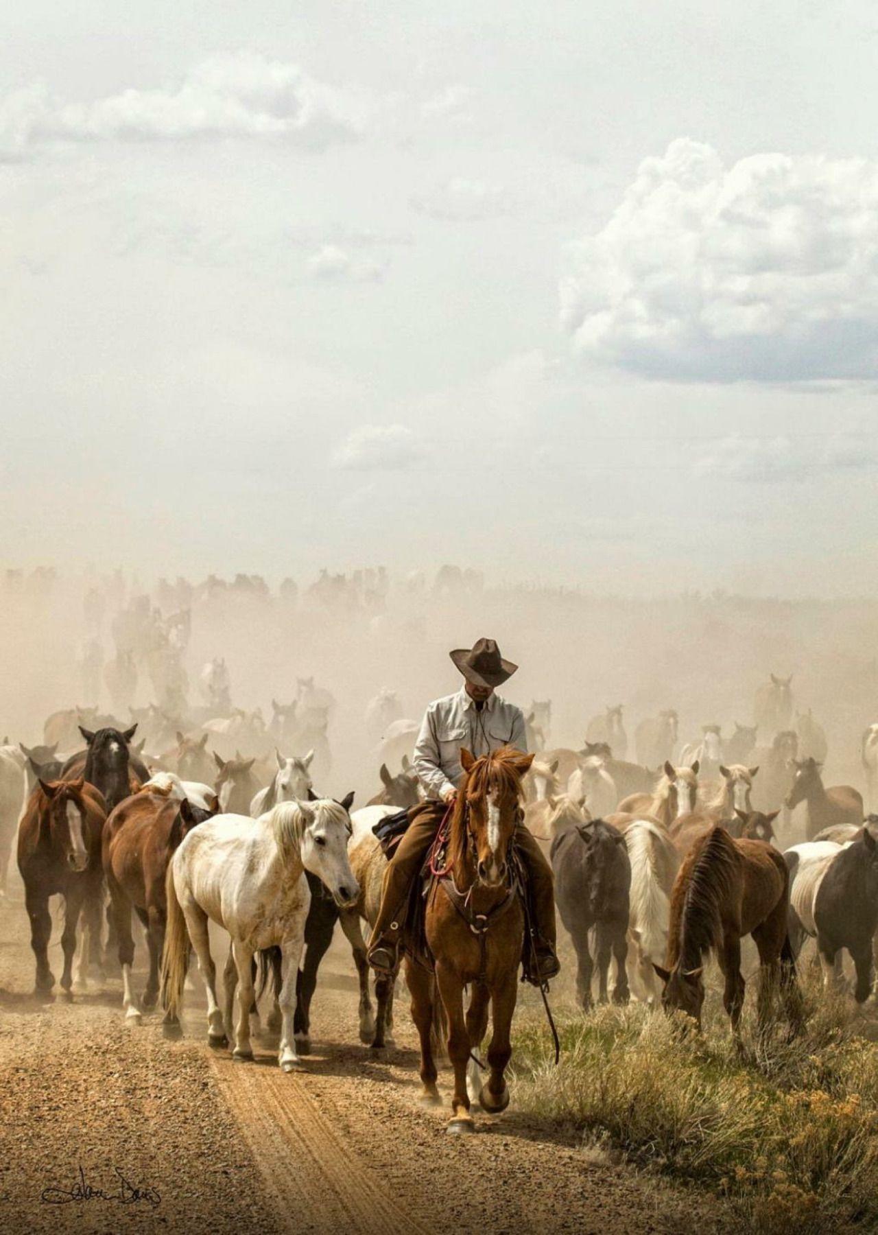 ,, BEAUTIFUL  #cowboysandcowgirls