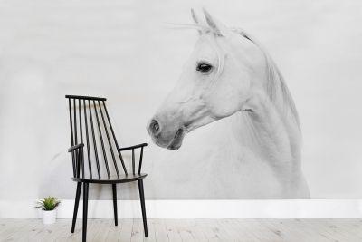 Arabian Horse Wallpaper Mural Wallpaper Heaven